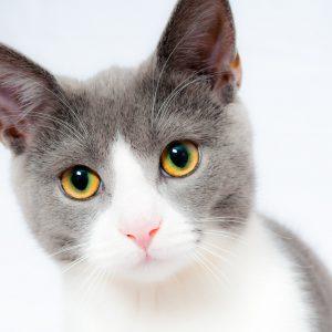 Small Animal Services Salisbury
