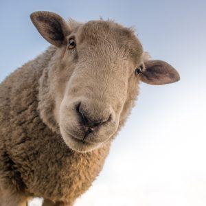 Farm Animal Testing BioTe